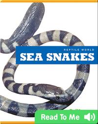 Reptile World: Sea Snakes