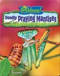 Deadly Praying Mantises