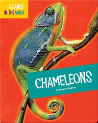 Lizards In The Wild: Chameleons