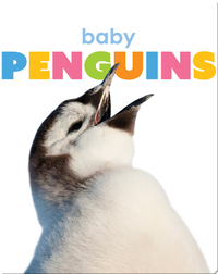 Starting Out: Baby Penguins