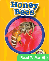 Honey Bees: World of Insects