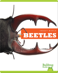Insect World: Beetles