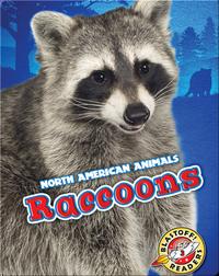 North American Animals: Raccoons