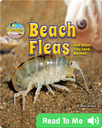 Beach Fleas and Other Tiny Sand Animals