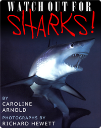 Watch Out For Sharks
