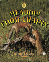 Meadow Food Chains