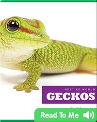 Reptile World: Geckos