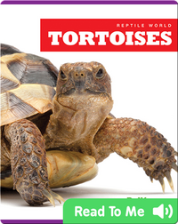 Reptile World: Tortoises