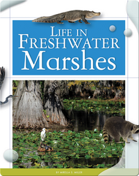 Life in Freshwater Marshes