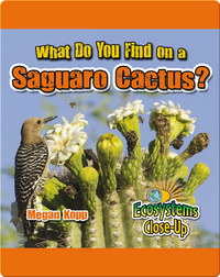 What Do You Find in a Saguro Cactus?