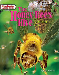 The Honey Bee's Hive: A Thriving City