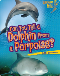 Can You Tell a Dolphin from a Porpoise?