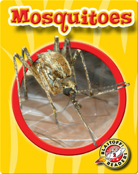 Mosquitoes: World of Insects