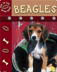 Eye To Eye With Dogs: Beagles