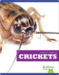 Insect World: Crickets