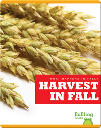 What Happens In Fall? Harvest In Fall