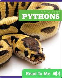 Reptile World: Pythons