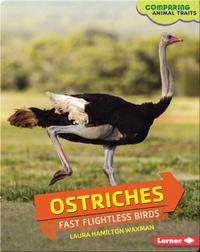 Ostriches: Fast Flightless Birds