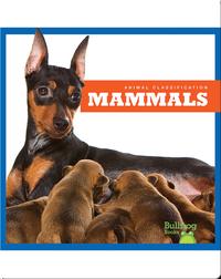 Animal Classification: Mammals