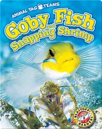 Goby Fish and Snapping Shrimp