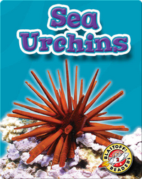 Sea Urchins: Oceans Alive