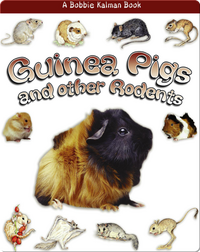 Guinea pigs and other Rodents