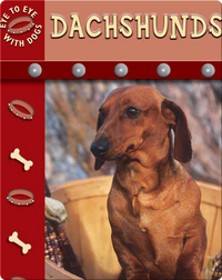 Eye To Eye With Dogs: Dachshunds