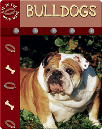Eye To Eye With Dogs: Bulldogs