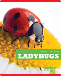 Insect World: Ladybugs
