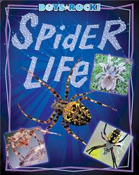Spider Life