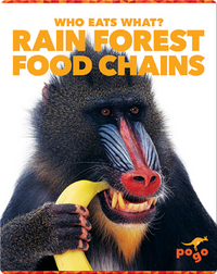 Who Eats What? Rain Forest Food Chains