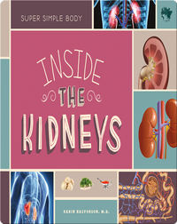 Inside the Kidneys