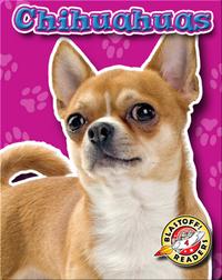 Chihuahuas: Dog Breeds