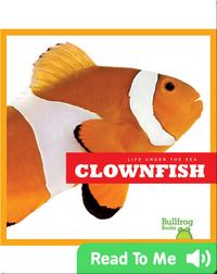 Life Under The Sea: Clownfish
