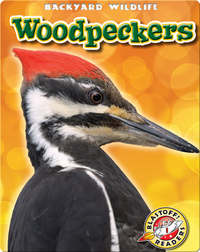 Woodpeckers: Backyard Wildlife