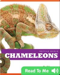 Reptile World: Chameleons
