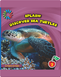 Discover Sea Turtles