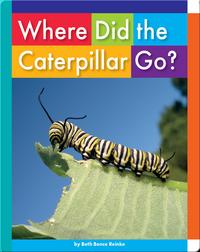 Where Did the Caterpillar Go?