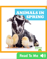What Happens in Spring? Animals in Spring