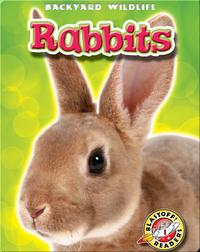 Backyard Wildlife: Rabbits