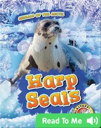 Harp Seals