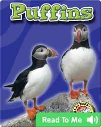 Puffins: Oceans Alive