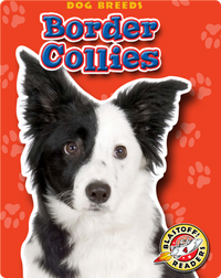Border Collies: Dog Breeds