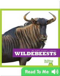 My First Animal Library: Wildebeests
