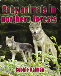 Baby Animals in Northern Forests