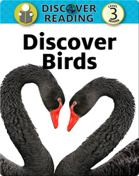 Discover Birds: Level 3 Reader