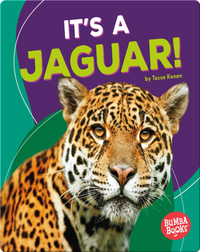 It's a Jaguar!
