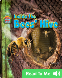 Inside the Bees' Hive