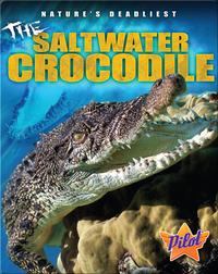 The Saltwater Crocodile