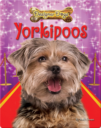 Yorkipoos